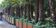 Экзотические растения в городском ландшафте