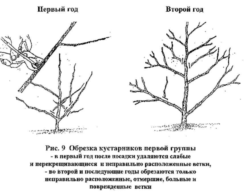 obrezka_kustarnikov_pervoi_gruppi