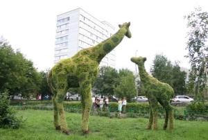 IMG_5457++жирафы-выбрали-10х15