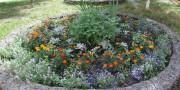 Самый зеленый двор