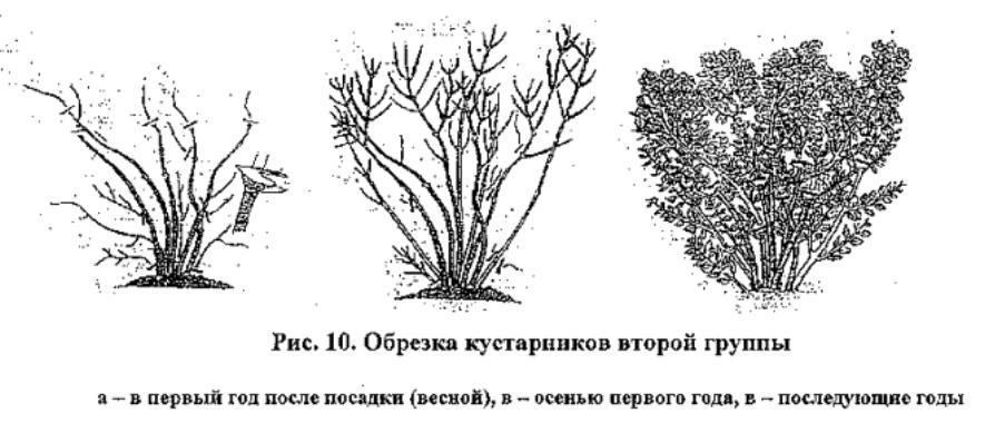 obrezka_vtoroi_gruppi