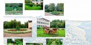 «Самый зеленый двор» — ул. Семафорная, 227а  МБОУ СОШ №6